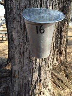Number 16 Bucket on Tree