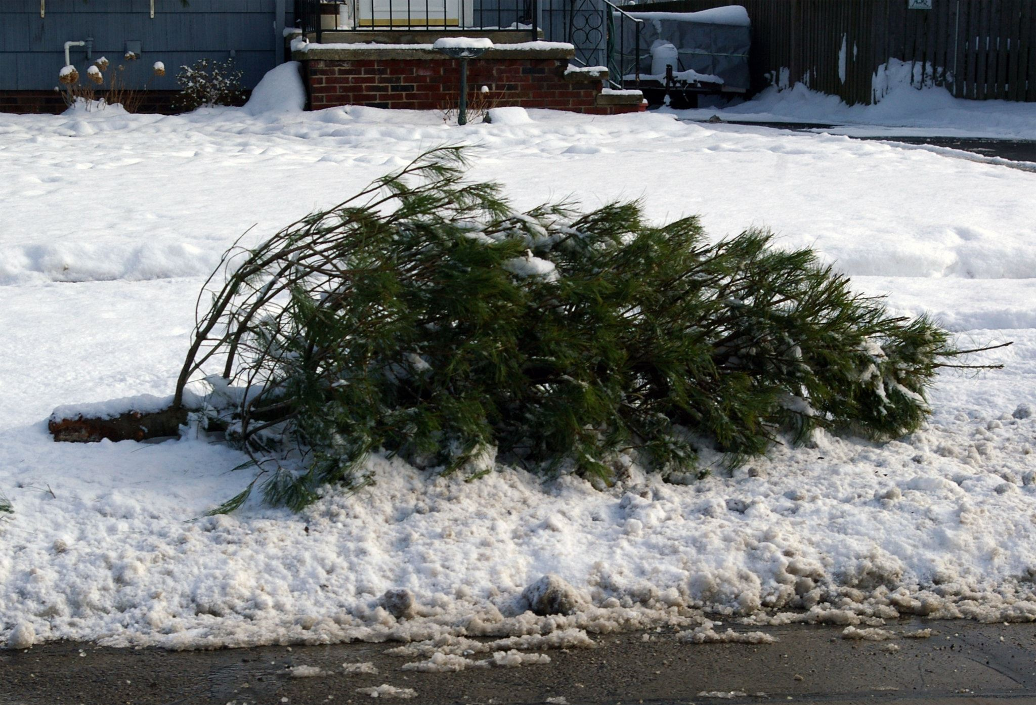 ChristmasTree Disposal